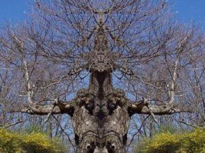 Δέντρα που προκαλούν... τρόμο