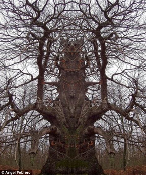 Perierga.gr - Δέντρα που προκαλούν τρόμο