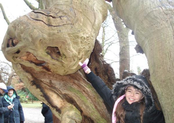 "perierga.gr - Ο ""ΕΤ"" του Σπίλμπεργκ βρέθηκε σε ένα δέντρο!"