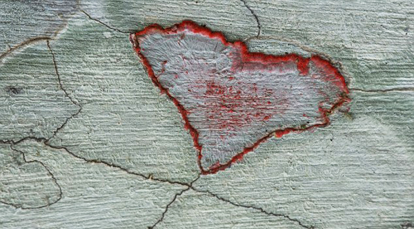 perierga.gr - Εντυπωσιακά σχήματα καρδιάς στη φύση!
