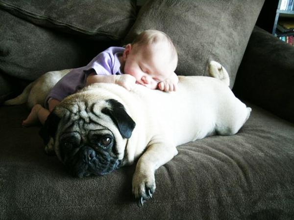 perierga.gr - Παιδιά και σκυλιά σε απίθανες πόζες!