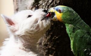 perierga.gr - Παπαγάλος ταϊζει μακαρόνια έναν σκύλο!