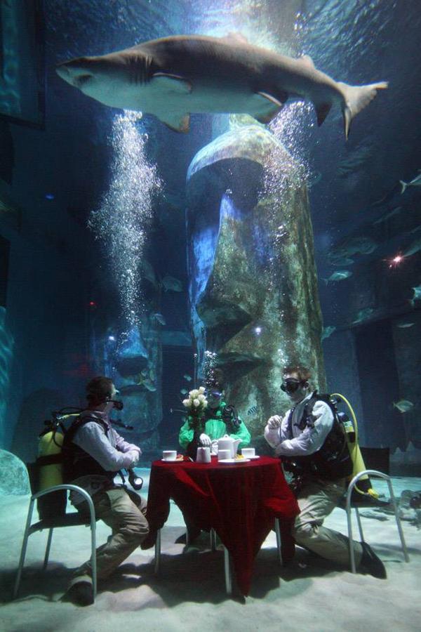 perierga.gr - Παίρνοντας πρωινό παρέα με... καρχαρίες!