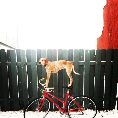 "perierga.gr - Maddie: Η ""σούπερ"" σκυλίτσα που ισορροπεί παντού!"