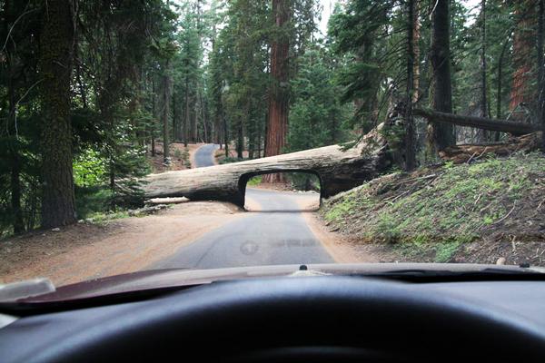 perierga.gr - Τι θέλει ένα τούνελ στον κορμό ενός δέντρου;