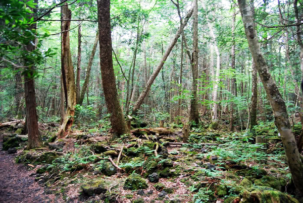 """Aokigahara: Το περίεργο """"δάσος των αυτοκτονιών""""!"""