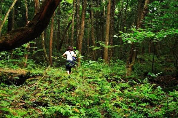 """perierga.gr - Aokigahara: Το περίεργο """"δάσος των αυτοκτονιών""""!"""