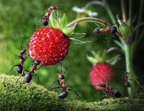 Perierga.gr - Όταν τα μυρμήγκια ποζάρουν