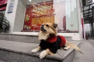 perierga.gr - Ένας σκύλος δίνει μαθήματα αφοσίωσης...