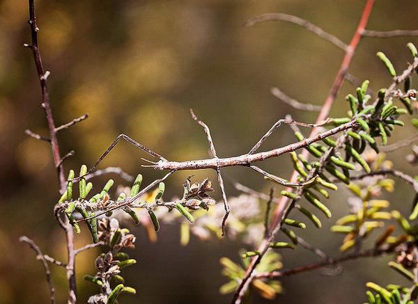 Βλέπεις κλαδιά δέντρου; Δες καλύτερα!