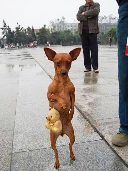 "perierga.gr - Σκυλίτσα πηγαίνει για ψώνια με την ""τσάντα"" της!"