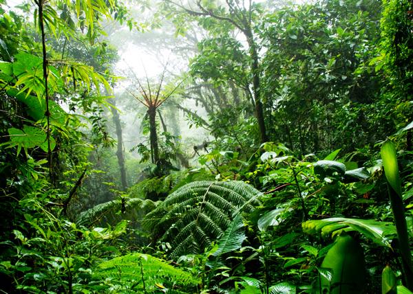 Ένα ολόκληρο δάσος με τα... χεράκια του