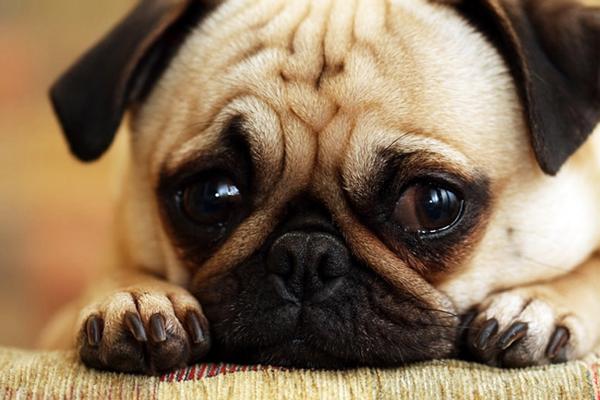15 λυπημένα κουτάβια που θα σας... χαλάσουν τη μέρα!
