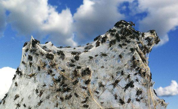 Αυστραλία: Τεράστιες εκτάσεις καλύφθηκαν με ιστούς αράχνης