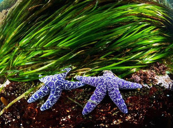 starfishbest.jpg