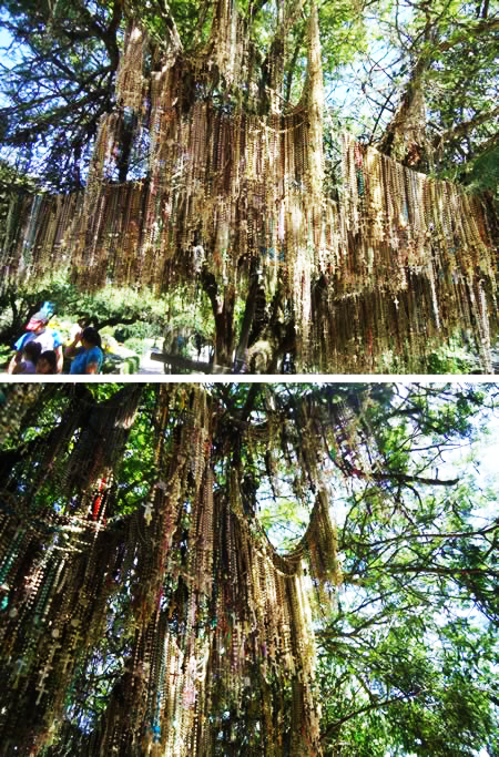 perierga.gr - Δέντρα με παράξενα... φορτία