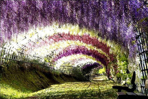 Ο παράδεισος έχει όνομα: Wisteria Tunnel!