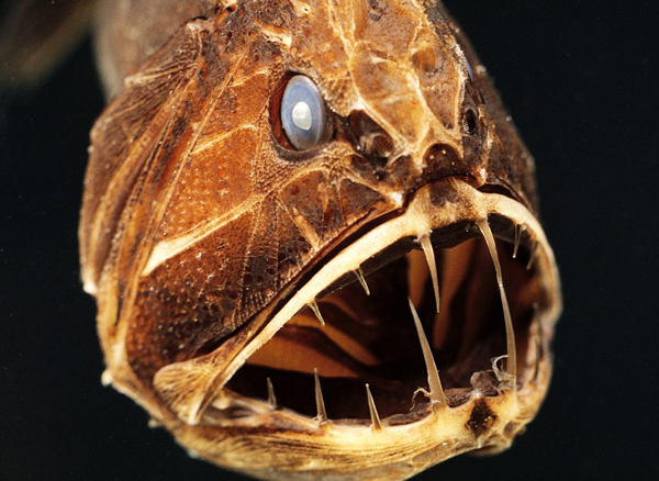 """perierga.gr - Τα τρομακτικά """"ψάρια της αβύσσου""""!"""