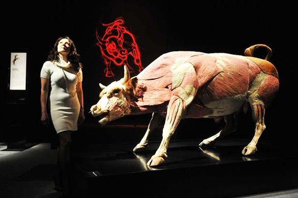 "perierga.gr - Ζώα... μέσα & έξω σε ένα περίεργο ανατομικό ""σαφάρι""..."