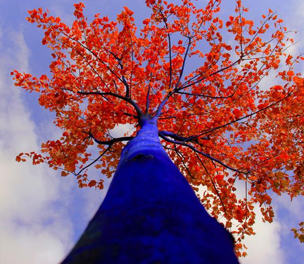 perierga.gr - Τα δέντρα στις πόλεις... βάφονται μπλε!