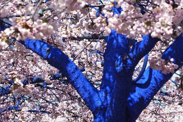 Τα δέντρα στις πόλεις... βάφονται μπλε!