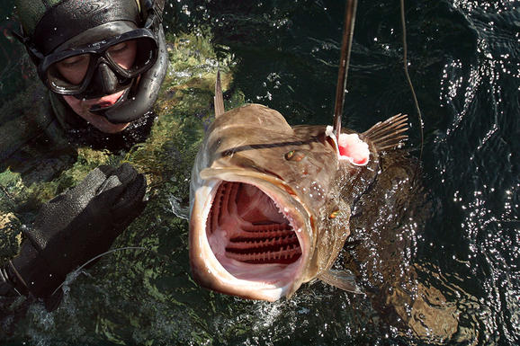 """perierga.gr - Ριψοκίνδυνοι """"κυνηγοί"""" κάτω από το νερό!"""