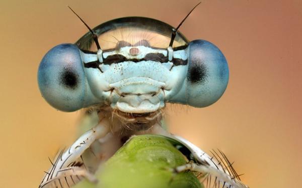 Έντομα σε ρόλο... μοντέλου!