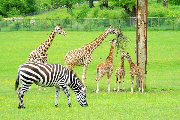 """perierga.gr - Ένα πρωτοποριακό """"Safari Park"""" στο κέντρο της πόλης!"""