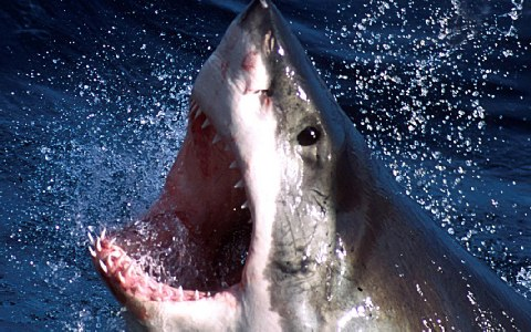 Perierga.gr - Φονικό αμόκ έπιασε ξαφνικά τους καρχαρίες
