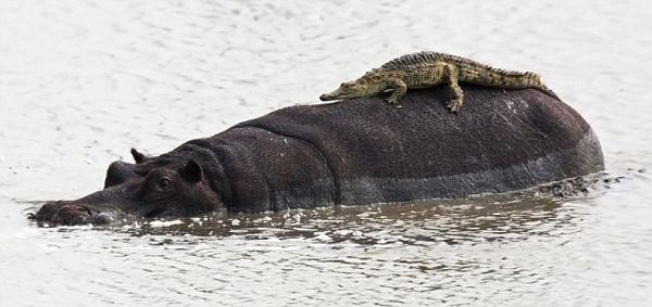 Έχουν και τα ζώα τις... παραξενιές τους!