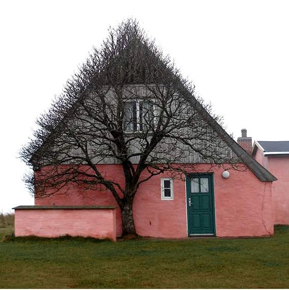 perierga.gr - Ένα περίεργο δέντρο στη στέγη ενός σπιτιού!