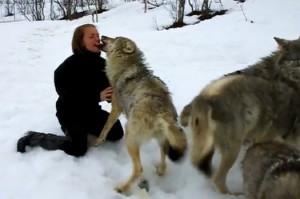 "perierga.gr - ΄Ενα ""θερμό"" καλωσόρισμα από άγριους λύκους!"