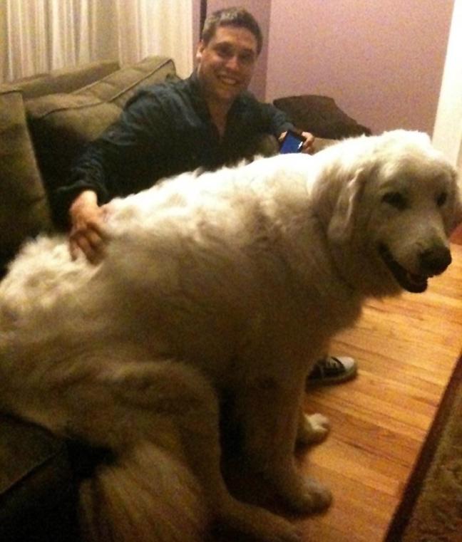 Perierga.gr - Φωτογραφίες από τα μεγαλύτερα σκυλιά στον κόσμο