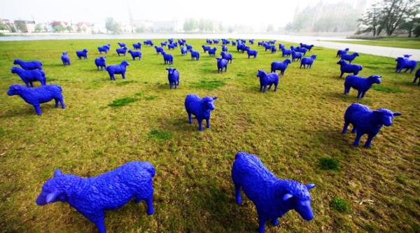 perierga.gr - Μυστηριώδη μπλε... πρόβατα εμφανίστηκαν στη Γερμανία!
