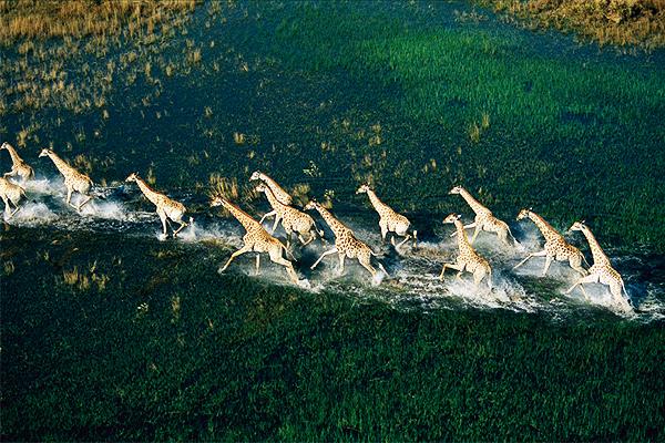 Η εκπληκτική άγρια φύση στην... αγέλη!
