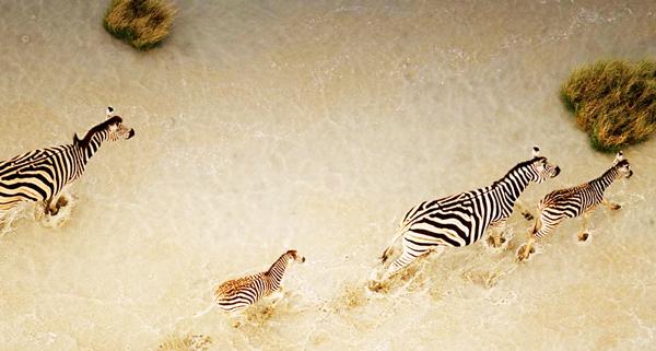 Η εκπληκτική άγρια φύση στην... αγγέλη!