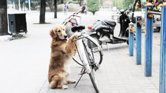 perierga.gr - Εναλλακτική κλειδαριά ποδηλάτου: Ένας σκύλος!