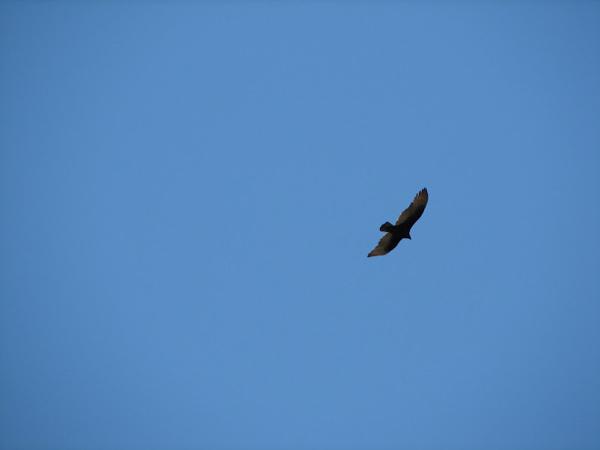 perierga.gr - Ένα κουτάβι από... τον ουρανό!