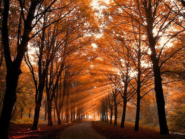 perierga.gr - Τα μογικό ταξίδι των ηλιαχτίδων...