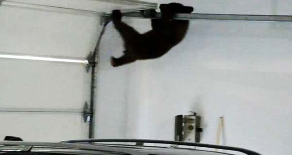 perierga.gr - Αρκουδάκι παγιδεύτηκε στο γκαράζ!