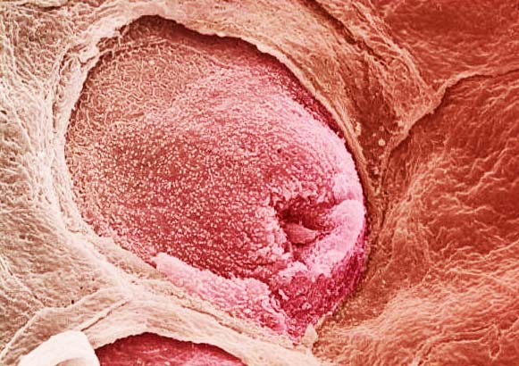 Το ανθρώπινο σώμα στο μικροσκόπιο!