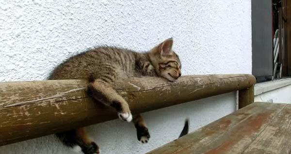 perierga.gr - Αυτό το γατάκι δεν ξυπνάει με τίποτα!