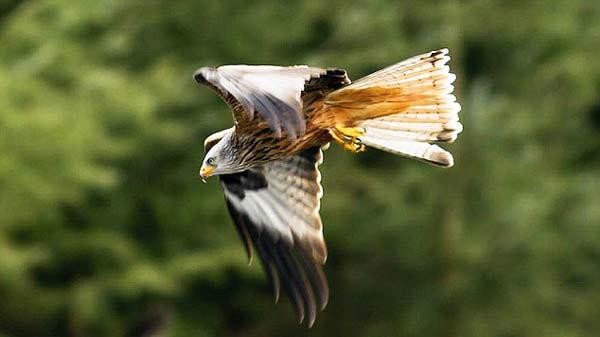 """perierga.gr - Αυτός ο αετός τα """"βρήκε σκούρα"""" από μια χήνα!"""