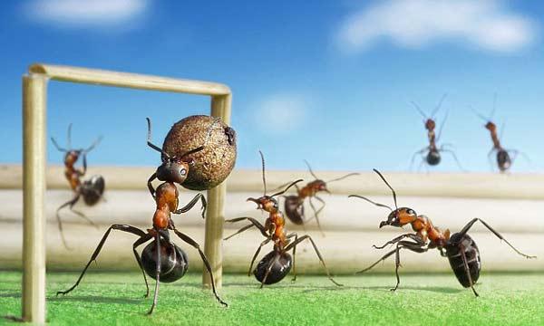 perierga.gr - Και τα μυρμήγκια πάνε EURO 2012!