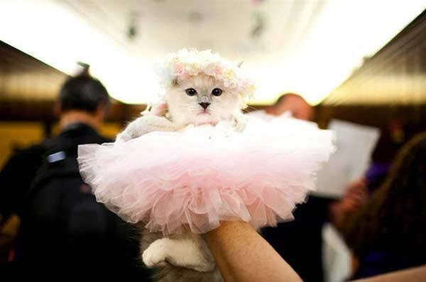 perierga.gr - Επίδειξη μόδας με... γάτες!