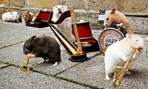 perierga.gr - Μια μπάντα... χάμστερ γιορτάζει την Ημέρα Μουσικής!