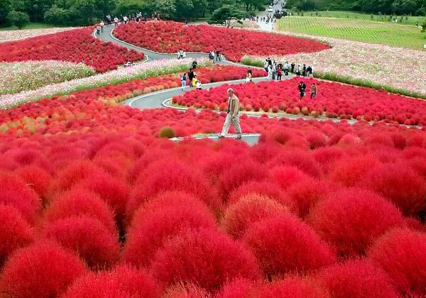 "perierga.gr - Ο ""μυστικός κήπος"" της Ιαπωνίας!"