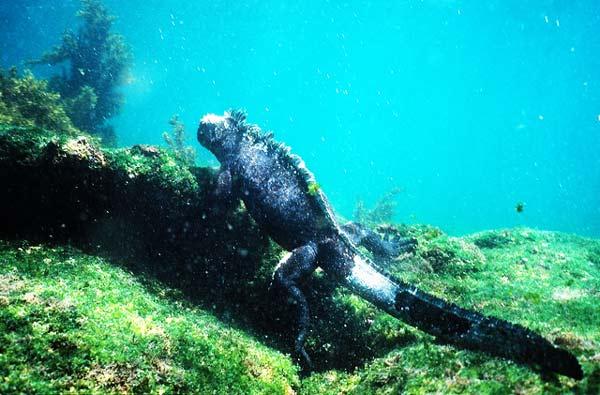 "perierga.gr - Τα υποβρύχια ""διαβολάκια της σκοτεινιάς""!"