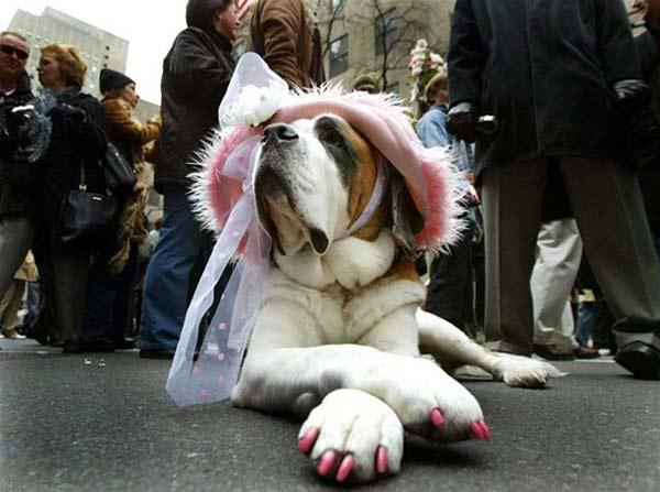 perierga.gr - Νέα τρέλα: Πεντικιούρ σε... σκύλους!