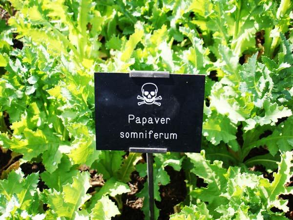 "perierga.gr - Ο ""δηλητηριώδης κήπος"" του Alnwick"